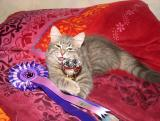Look what I've got!  - Aslak with his club trophy for NOM kittens and rosette.