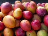 Tommy Atkins mangoes