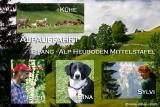 Alpauffahrt auf die Alp Heuboden Mittelstafel 1464m.ü.M.