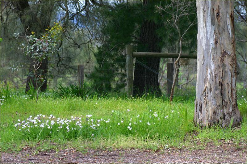 Wildflowers on the road verge in spring