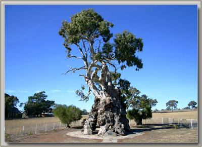 Herbig family tree at Springton