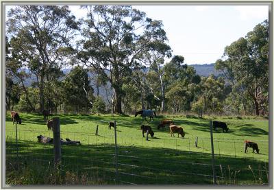 Farm animals in the sunshine