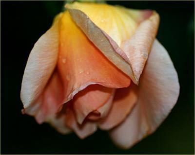 Donna 1SZ Rose Brown EABAA|#Burton Pearl Berretto