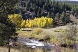 Aspen near Cripple Creek