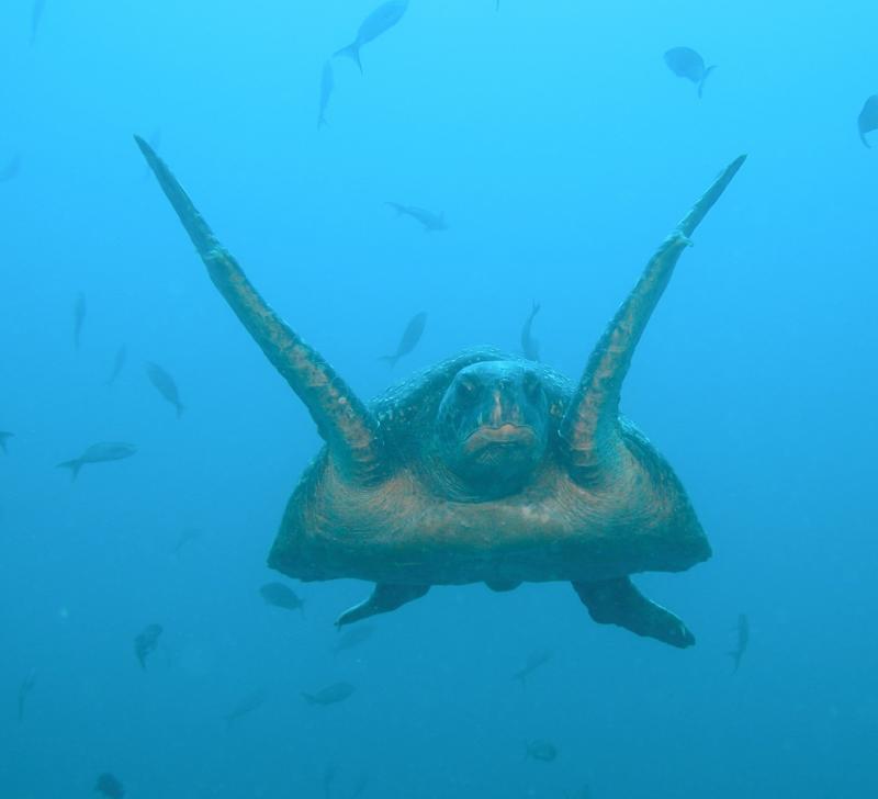 Galapagos 3.JPG