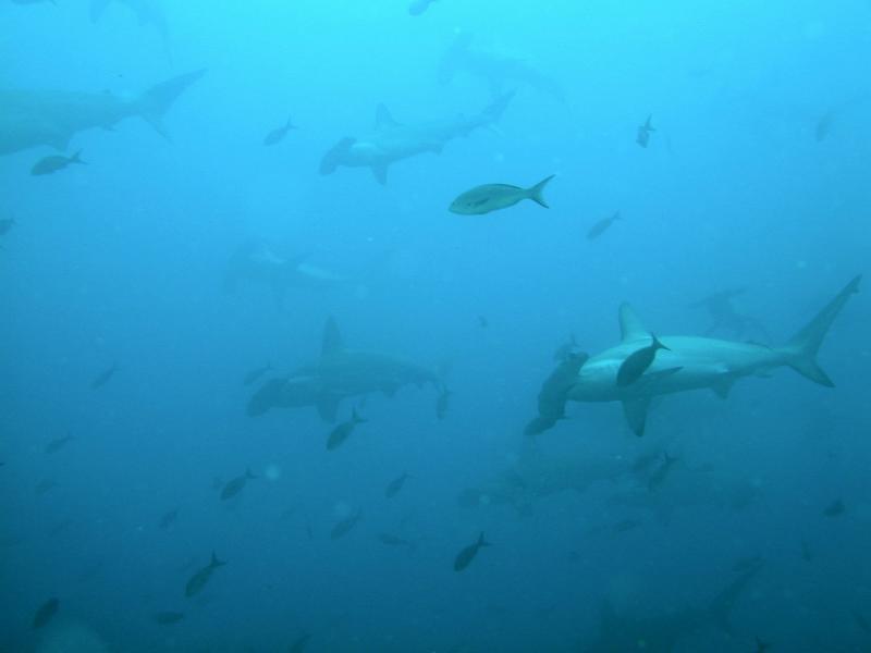Galapagos 39.JPG