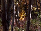 wSugarloaf Trees11.jpg