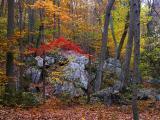 wSugarloaf Trees15.jpg