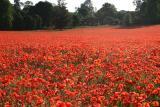 NT Hatchlands Park, Surrey