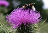 Pollen Hunting I