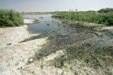 Raw sewage in the Wadi Gaza