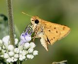 flyingbug