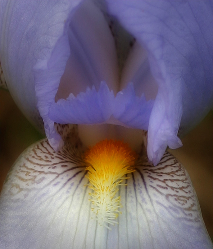 iriscloseblur.jpg