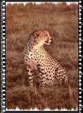 Cheeta 2, Shamwari Reserve