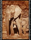 Baby Elefant 2, Shamwari Reserve