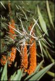 Aloe & Thorns , Shamwari Reserve