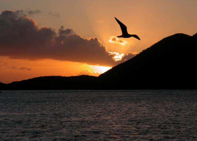 Sunset Gull, British Virgin Islands