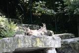Salzburg and Zoo