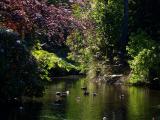 09-06-05 johnston gardens