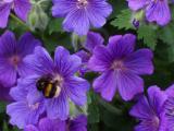 26-06-05 bee