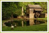 Summer at Bromley Mill