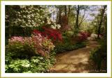 Morning Azalea Path