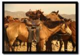 Horses taking a Rest, Tov Aimag