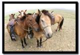 Our Horses, Tov Aimag