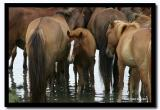 Horses Drinking in the River, Tov Aimag