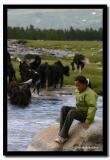 Looking after the Yaks, Bayan-Olgii