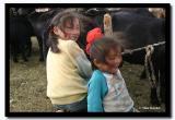 Milking Goats, Bayan-Olgii Aimag