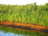 Narev River