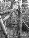 Great Head Hike Trees