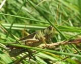 S2 IS - Grasshopper