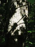 S2 IS - Tree
