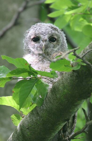 Im watching you!
