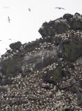 Close-up of nesting sites