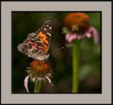 Jim Henderson's Photography Workshops at Callaway Gardens: Schedule and Details