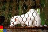 Jilin �林 - 白鼬 Ferret