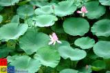 Jilin �林 - Beishan Park (�林 - 北山公園)
