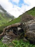 Shepherds Hut.jpg