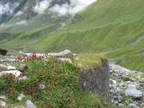 Flowers in valley.jpg