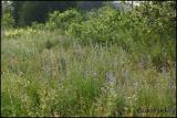 Jackson Creek Wildflowers 6458.jpg