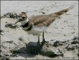IMG_7472 Killdeer.jpg