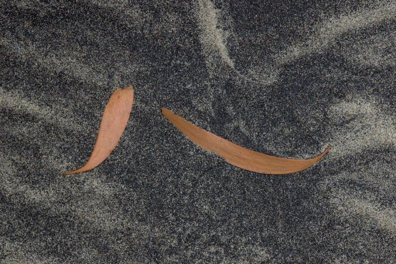leaves and black sand hinchinbrook  island 12 by 18 _DSC2525