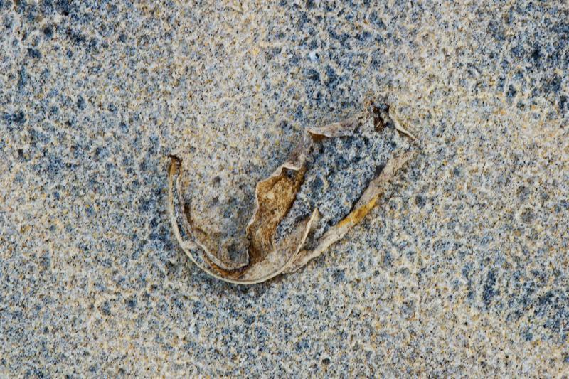 dead leaf raindrops hinchinbrook  island<p>_DSC2788