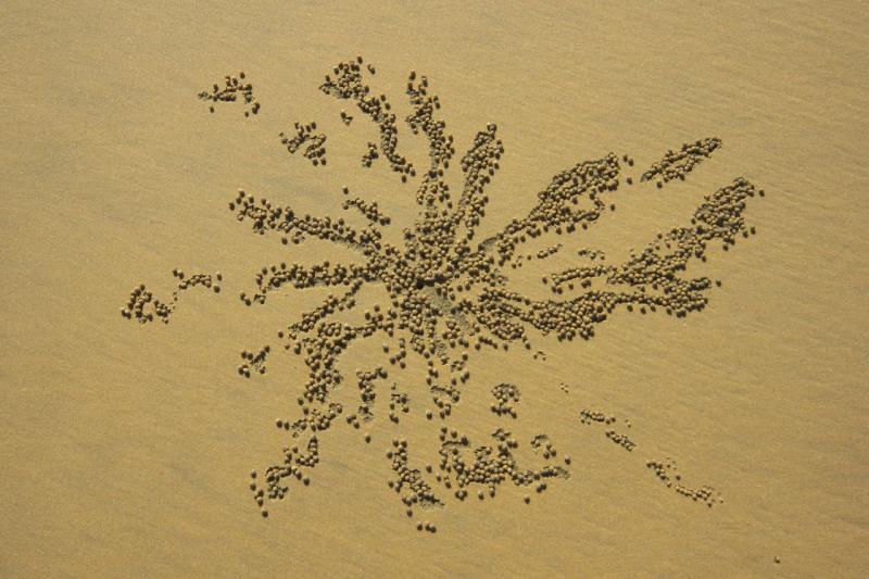 hinchinbrook  island crab star<p>_DSC3080