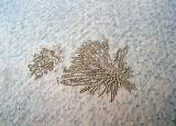 hinchinbrook beach sand footprints and crab trackscn000619