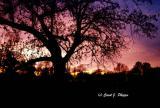 Enchanted Evening.JPG