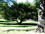 Grounds of Kordes Retreat